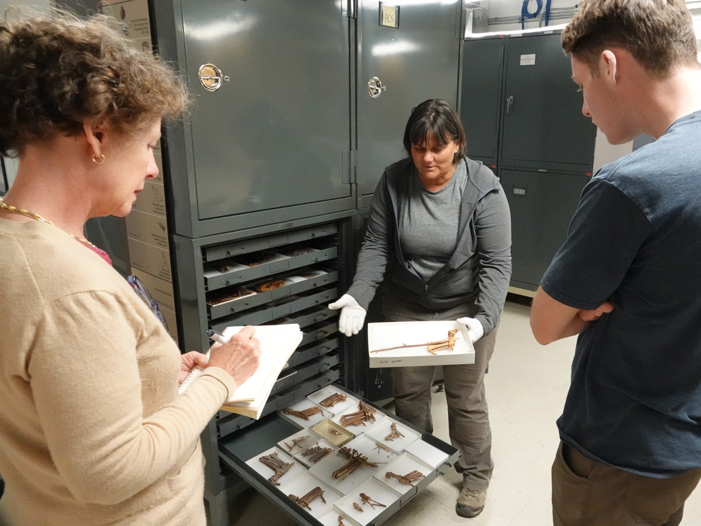 Mary Ellen Hannibal takes notes while a Grand Canyon naturalist pulls out trays of specimens from a metal cabinet