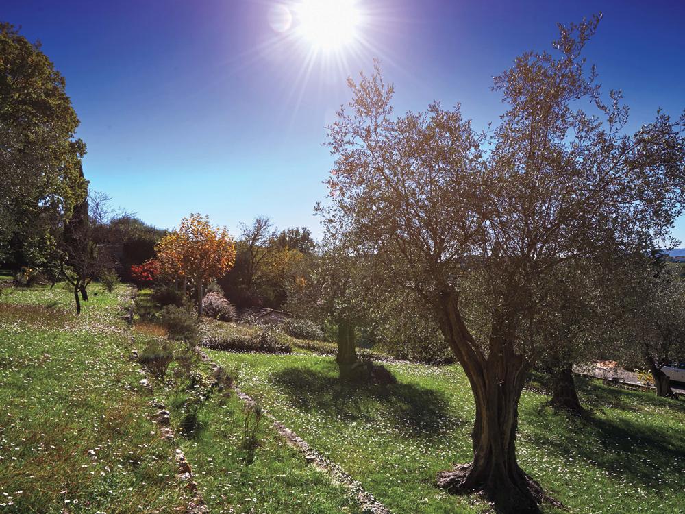 Green grass, fruit trues, bright blue sky