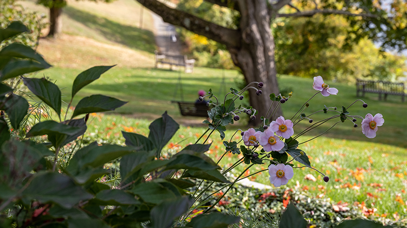fall campus scene with purple flowers
