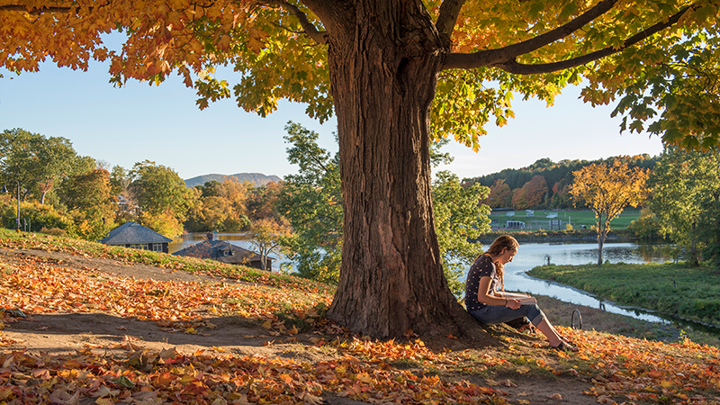 Student reading under an autumn tree