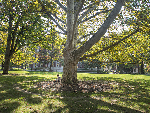 Photo of a student studying under a tree on campus