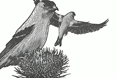 """Ada Limon broadside thumbnail, """"The Year of the Goldfinches"""""""