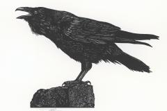 """WS Merwin broadside, """"Noah's Raven"""""""
