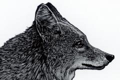 """Adrienne Rich broadside, """"Fox"""""""