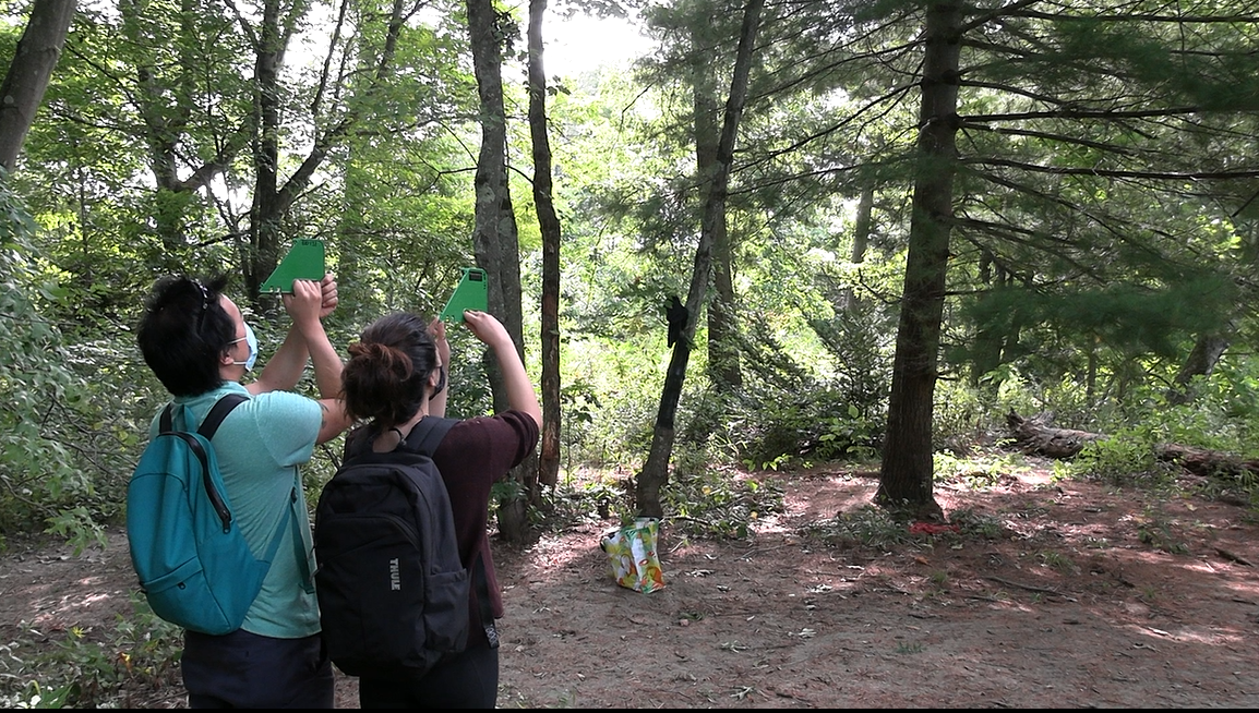 Picture of Professor Albert Kim and student Olivia Handoko measuring a tree with tangent height gauges