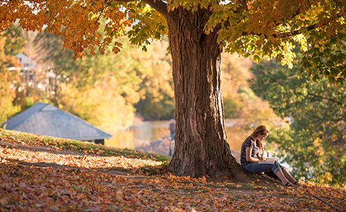 Student studying under a fall tree