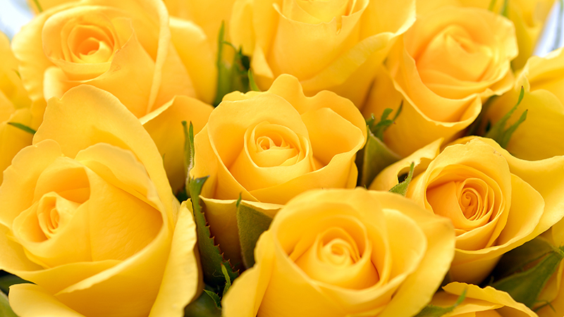 Yellow roses at Commencement