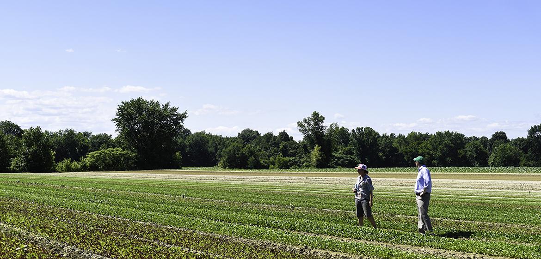 Queen's Greens Farm