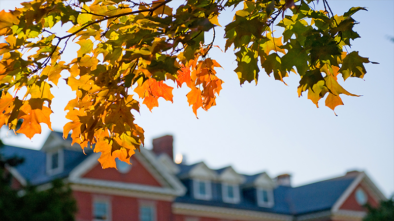 Beautiful fall leaves in focus, out-of-focus college building in background