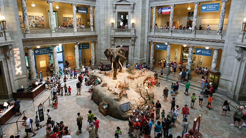 Wide view looking down on Smithsonian National Museum of Natural History's Rotunda Elephant exhibit