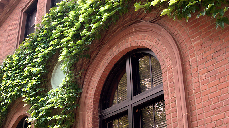 Detail of ivy surrounding the windows on Neilson Library