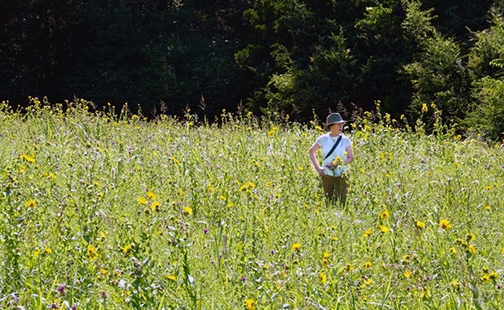 Citizen scientist Mary Ellen Hannibal '81 observes a restored habitat and the butterflies it attracts