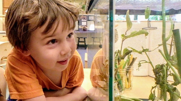 Boy looking at plants in an aquarium