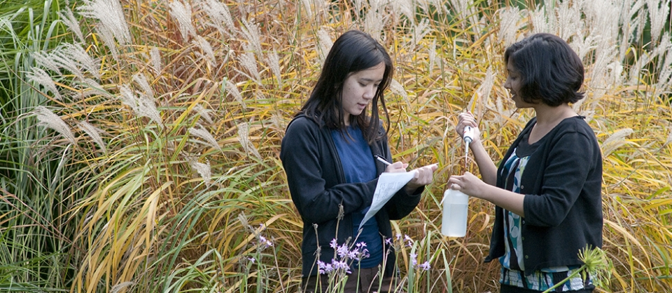 Two Smith students stand in tall grass and take specimen samples