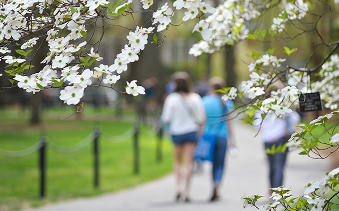 Students walking under flowering spring branches