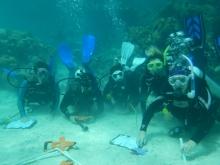 five scuba divers