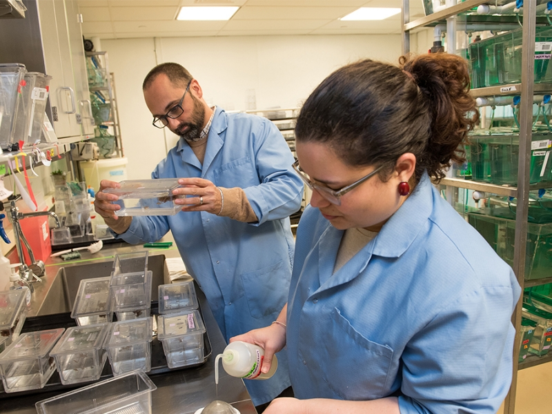 Associate professor Michael Barresi (left) is one of eight Smith faculty members who have received NSF Career grants since the program for early career faculty began in 1995.