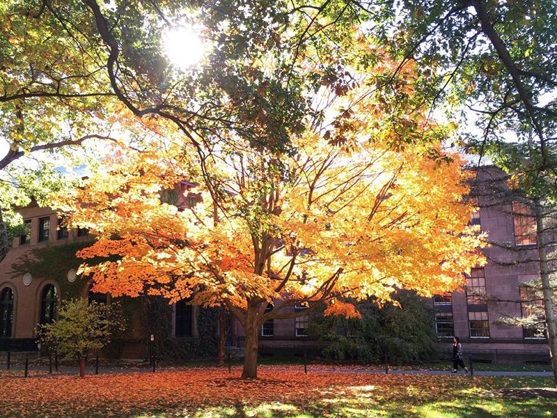 Tree in autumn at Smith College on Seelye lawn