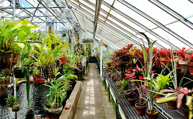 The Lyman Plant House and Conservatory
