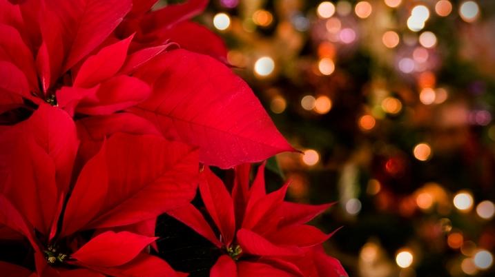 Christmas Vespers