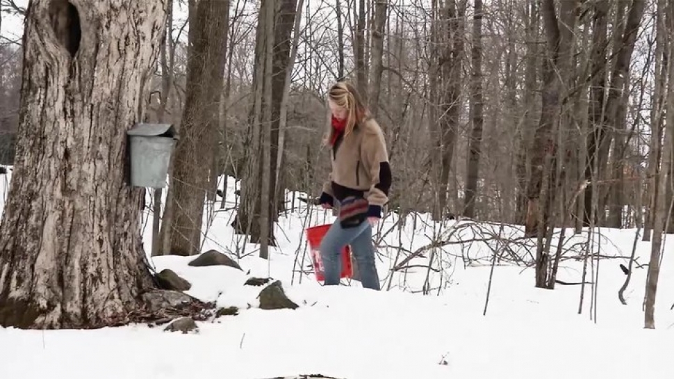 Maple Sugaring at MacLeish Station